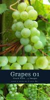 Grapes 01 - Stock Pack by kuschelirmel-stock