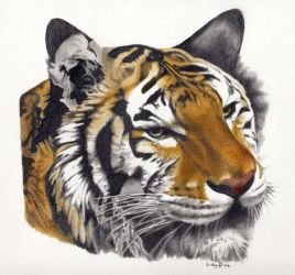 tiger . by h3llb3nt1969