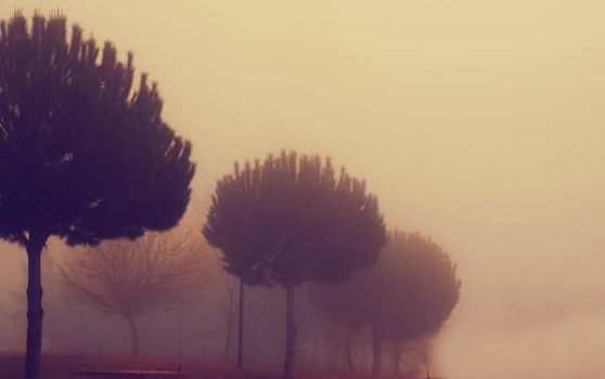fog in the campus 2 by evremm
