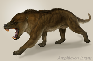 Amphicyon ingens by Viergacht