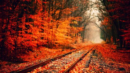Beautiful Autumn Forest And Railway Scenery (Rare) by ROGUE-RATTLESNAKE