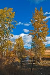 Fall comes to Lynch Creek by quintmckown