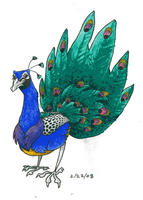 Check Out The Peacock by KelpGull