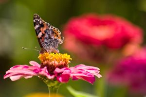 Fly, fly, butterfly by risbo