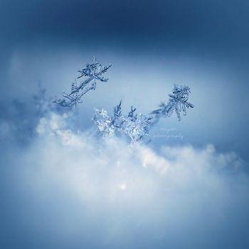 snowflakes by Megson