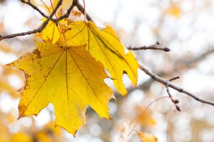 Autumn Yellow by Cathie111