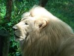 King of the Jungle by bmxer197