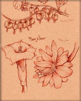 Flower study 3 by LordMaru4U