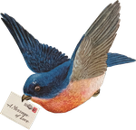 Big Blue Bird mail (stock) by linux-rules