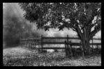 Black and white country scene by Robboflash