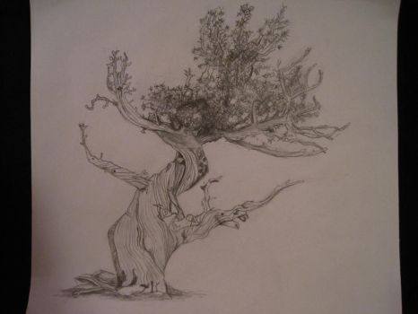 tree by maggie14and1