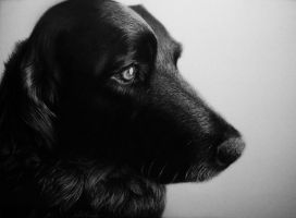 Baron - Pencil Drawing by TricepTerry