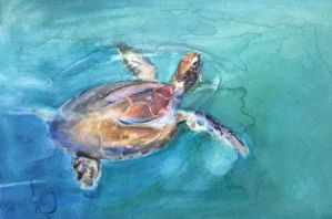 Green sea turtle by hrutger