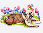 Watercolor Puppy Portrait for Our Bulldog friend by Catifornia