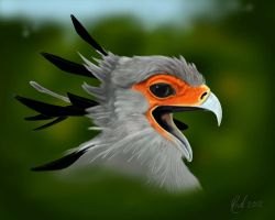 Secretary Bird by Rick-Lilley