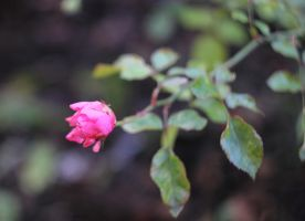 lonely flower by DieCooleSocke