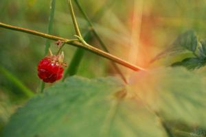 Raspberry by noll4tva