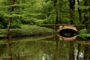 bridge deep in the forest by torobala