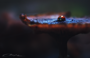 Autumn ladybird by MaaykeKlaver