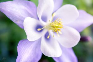 Purple Pistil by Jorgipie