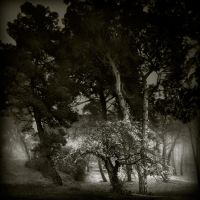 'songs from the wood...' III by Kaarmen