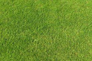 Green Grass Texture 01 by SimoonMurray