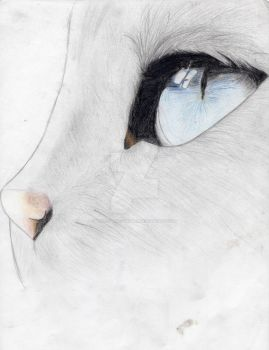Profile of a Kitty by HollowDirtyBones