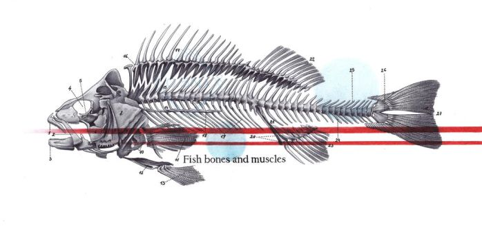 ballpoint pen fish bones and muscles by 05Na