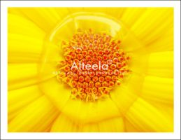 yellow by a-alteela