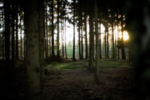 Forest at sunset 9 by mprangenberg