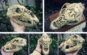 Bear's skull /carving - FIN/ by quidames