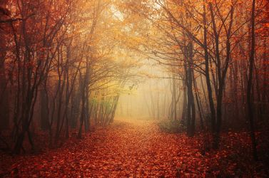 Autumn Walk LI. by realityDream