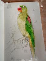 Indian Parrot by Loisa