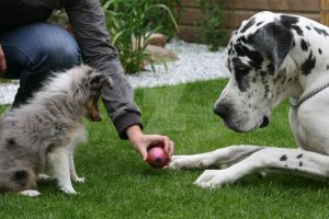 Puppy and a Great Dane by Klimopjes