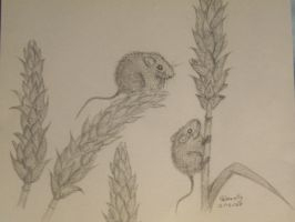 Harvest mice by Twillight-lover