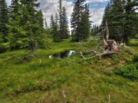 Swampy Forest With Mudpuddle by Burtn
