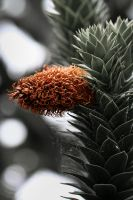 Monkey Puzzle by doches