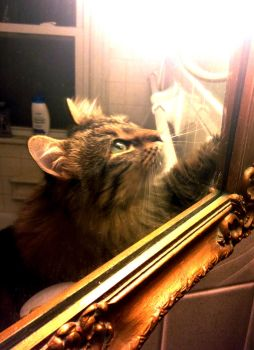 trapped in the mirror by tolva