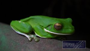 Frog On The Railing by pfgun0
