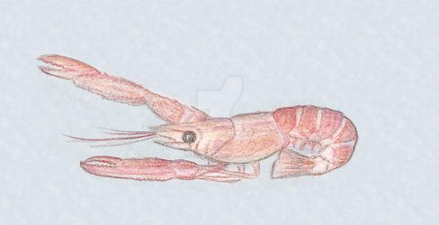 Norway Lobster by KerenGoldian