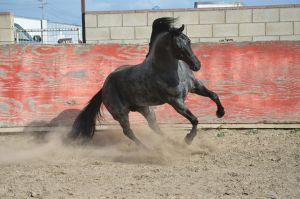 DWP FREE HORSE STOCK 63 by DancesWithPonies