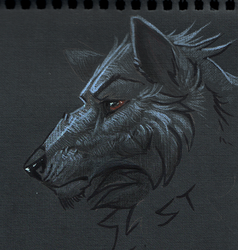 Wolf by Terriniss