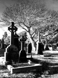 Glasnevin Cemetery V by CadenReid