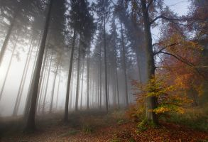 Foggy Forest II by vamosver