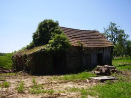 ivy shed by marlene-stock