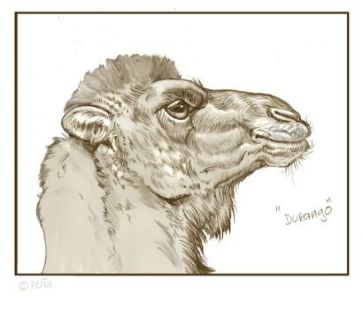 Camel by Reptangle