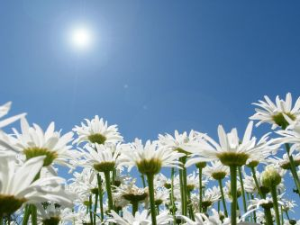 Daisies and Blue by anakinpedro