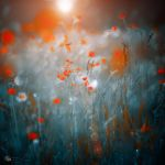 Shape of my heart by ildiko-neer