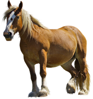 Horse PNG Stock 1 by Gilgamesh-Art