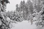 Winter Background 6 by Kuoma-stock